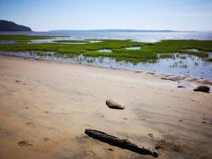 Contribution pour approfondir les connaissances sur les marais salées de l'estuaire moyen